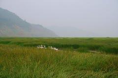 沼泽地在黄河,洛阳 免版税库存图片