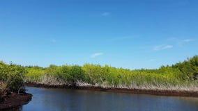 沼泽地城市,佛罗里达,美国 在美洲红树森林的汽船游览 影视素材