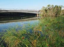 沼泽地天然公园在城市 免版税库存照片