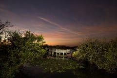 沼泽地日落-在Twighlight的美洲蛇鸟 库存照片