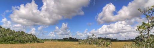 沼泽地横向全景 库存图片