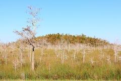 沼泽地横向冬天 库存图片