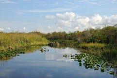 沼泽地横向 库存照片
