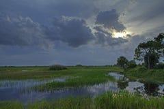 沼泽地横向 库存图片