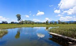 沼泽地池塘在晴天 免版税库存照片