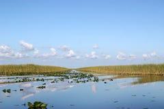 沼泽地池塘 库存照片
