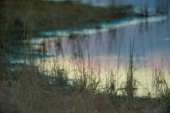 沼泽地海岸线在黄昏/傍晚与在镇静湖海岸线水反射的蓝色,紫色,橙色多云天空在 免版税库存图片