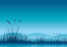 沼泽地清早。 库存照片