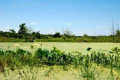 沼泽地风景得克萨斯美国 免版税图库摄影