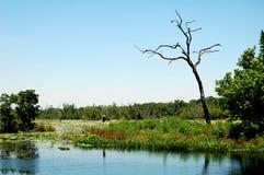 沼泽地风景得克萨斯美国 免版税库存图片