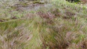 沼泽地飞过 影视素材