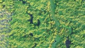 沼泽地,与水小河裂缝的绿草顶视图  从寄生虫的沼泽 股票录像