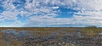沼泽地,佛罗里达 图库摄影