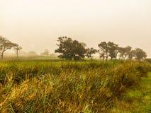 沼泽地 非洲海角南城镇 免版税库存图片