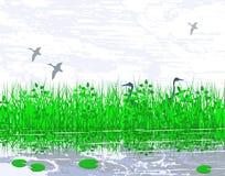 沼泽地 图库摄影