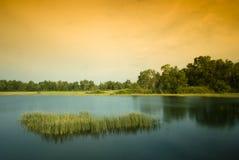 沼泽地 库存照片