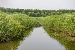 沼泽地 免版税库存照片