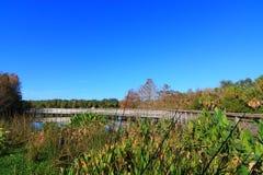 沼泽地 库存图片
