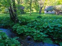 沼泽小河在一个早期的春天早晨 免版税库存图片