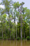 沼泽或多沼泽的支流 库存照片