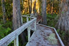 沼泽木板走道在佛罗里达 免版税库存图片