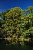 沼泽树2 免版税库存照片