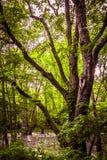 沼泽树 库存照片