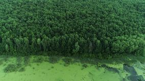 沼泽森林鸟瞰图保护公园跨线桥 影视素材
