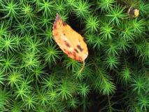 沼泽植物群 库存图片