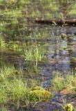 沼泽气氛 免版税库存照片
