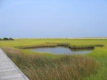 沼泽池塘盐 库存照片