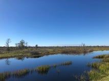 沼泽河在一个夏日 图库摄影