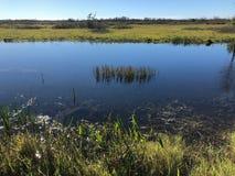 沼泽河在一个夏日 库存照片