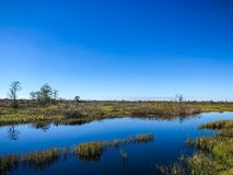 沼泽河在一个夏日 免版税库存照片