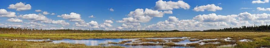 沼泽河 库存照片
