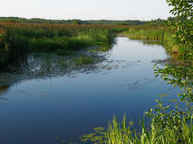 沼泽河 库存图片