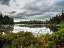沼泽海狸池塘阿尔冈金省立公园 库存照片