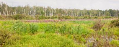 沼泽混杂的草夏天 免版税库存图片