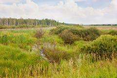 沼泽混杂的草夏天 库存照片