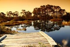 沼泽湖 库存图片