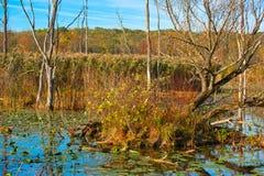 沼泽生态系在秋天 库存照片