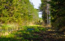 沼泽生态系的恢复在森林附近的 库存图片