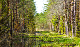 沼泽生态系的恢复 免版税图库摄影