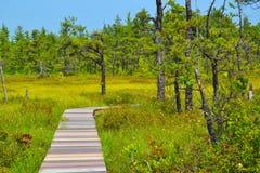 沼泽的一条长,弯曲的木板走道 免版税图库摄影