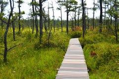 沼泽的一条长,弯曲的木板走道 图库摄影