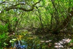 沼泽的入口在森林 库存照片