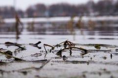 沼泽的图片 免版税库存照片