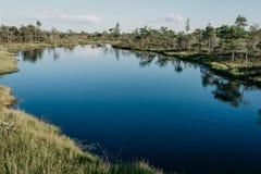 沼泽的大蓝色湖在夏天 Kemeru拉脱维亚 库存图片