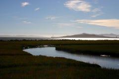沼泽的安静 库存图片