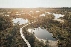 沼泽的很多湖在日落在夏天 Kemeru拉脱维亚 免版税库存图片